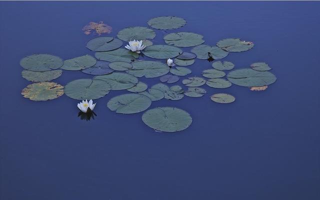 , 'Waterlillies,' 2010, ARC Fine Art LLC