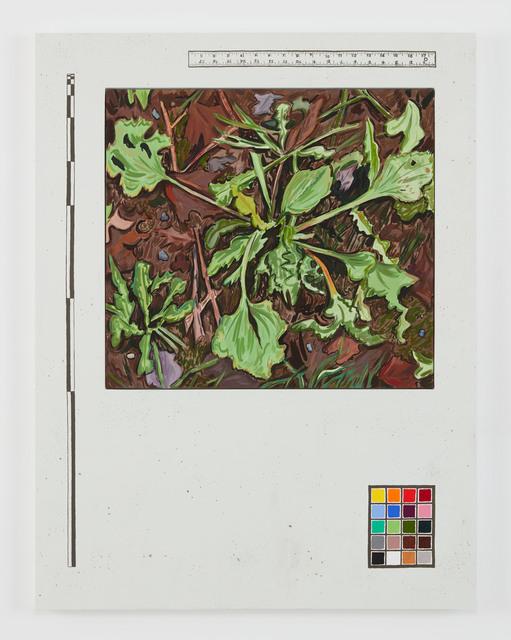 Josephine Halvorson, 'Ground Register (First Frost)', 2018, Sikkema Jenkins & Co.
