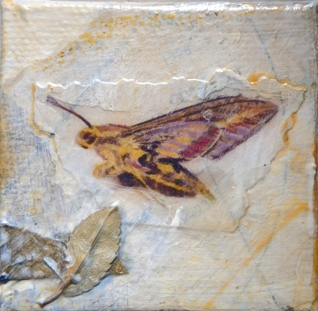 , 'Sphinx Moth,' , Sparrow Gallery