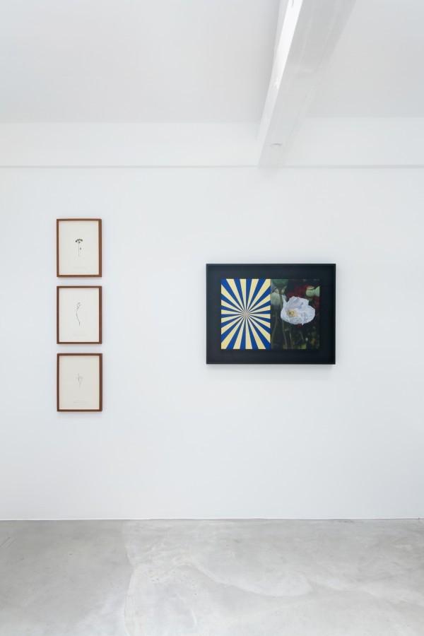 (Top to bottom) 'Herbarium I', 'Herbarium III', 'Herbarium II', 2014 by Ilya Dolgov. 'Afyon & Expander (GOLD)' 2013-2017 by Mustafa Hulusi.