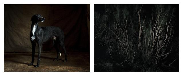 , 'Forest & Galgo,' 2015, Adamson Gallery