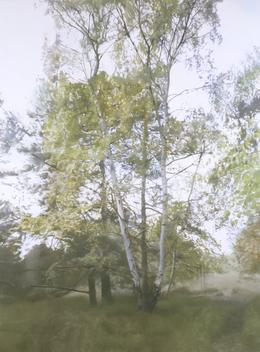 , 'Birch 1,' 2005, Vera Munro