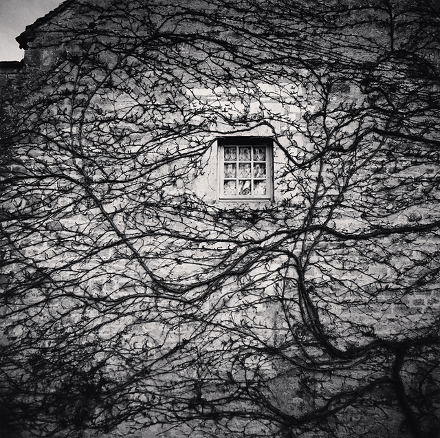 , 'Window and Vines, L'Abbaye de Fontenay, Bourgogne,' 2013, Robert Mann Gallery