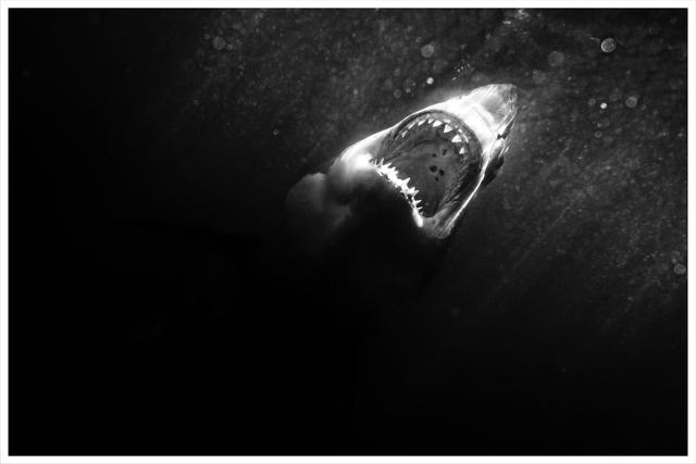 , 'Darkness Sets,' 2014, TASCHEN