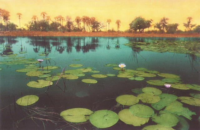 , 'Water Lilies, Orange Sky,' 2000, Pucker Gallery