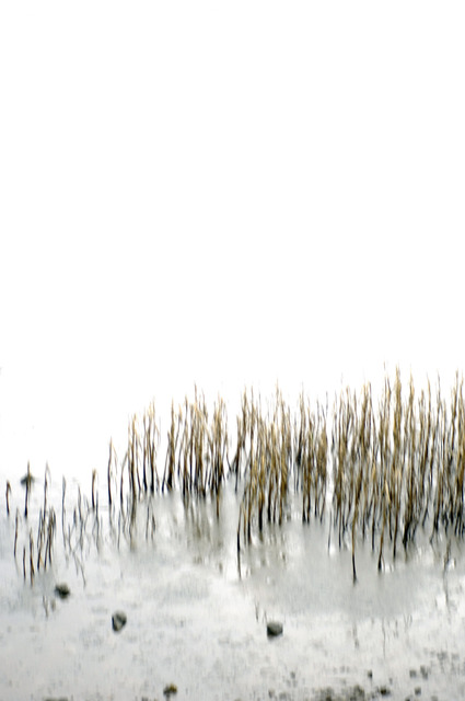 , 'Manka Weeds,' 2013, Winston Wächter Fine Art
