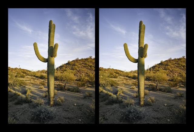 , 'Two Saguaros Posing as One,' 2016, Lisa Sette Gallery