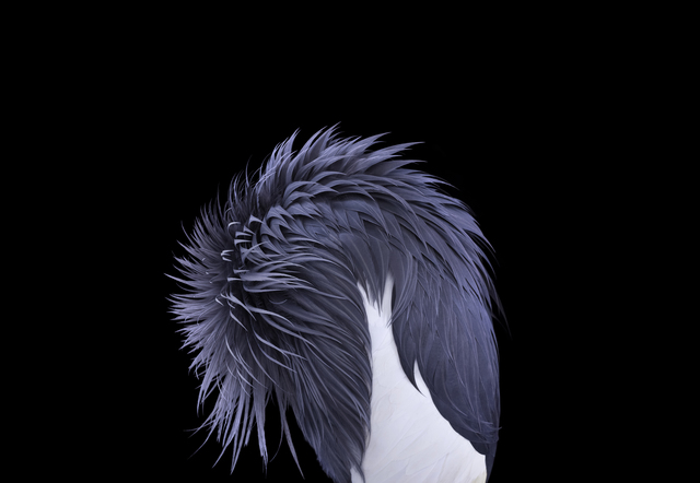 , 'African Crowned Crane #4, Los Angeles, CA,' 2011, photo-eye Gallery