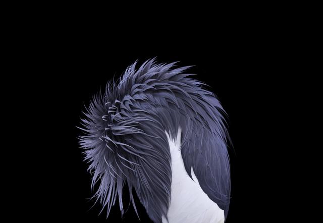 , 'African Crowned Crane #4, Los Angeles, CA,' 2011, photo-eye Gallery