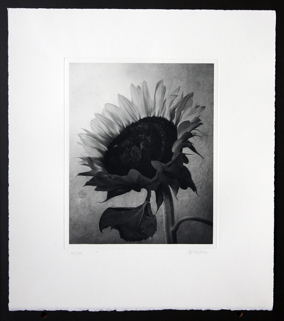 Cy DeCosse, 'Sunflower', Kitano Alley Gallery