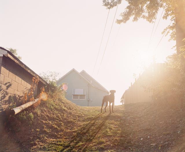 , 'Dog on Hill (Sunrise), Omaha, NE,' 2005-2018, Huxley-Parlour