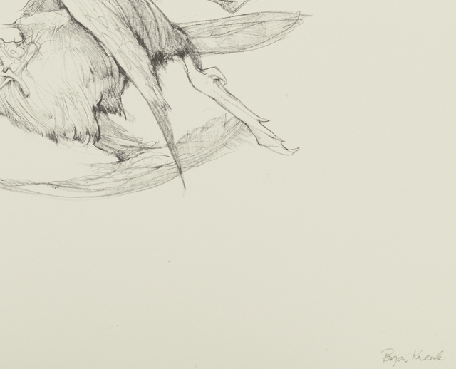Bryan Kneale, 'Cormorant I', ca. 2010, Print, Lithograph, Pangolin London