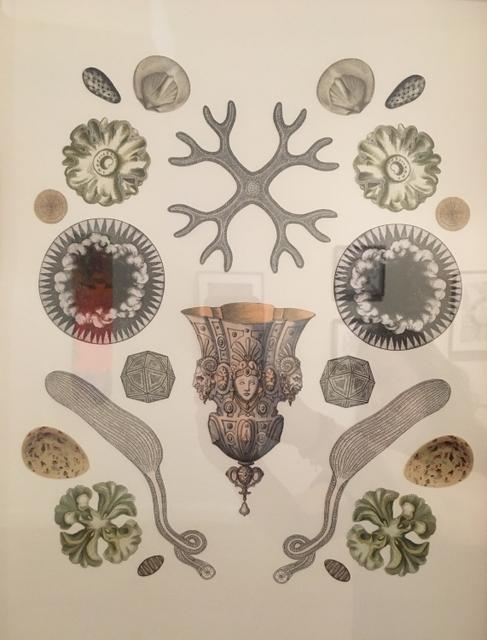 ", '""Origins: Diatom"",' 2017, Parlor Gallery"