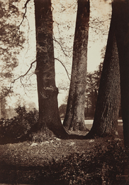 Gustave Le Gray, 'Troncs d'Arbres, Fontainebleau,' 1855, Phillips: The Odyssey of Collecting