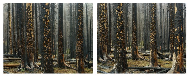 , 'Early Spring, Peeling Bark in Rain (Diptych),' , Gail Severn Gallery