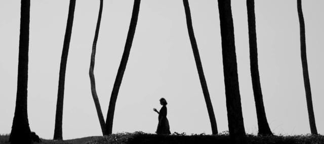 , 'Forest,' 2016, Galerie Sandhofer