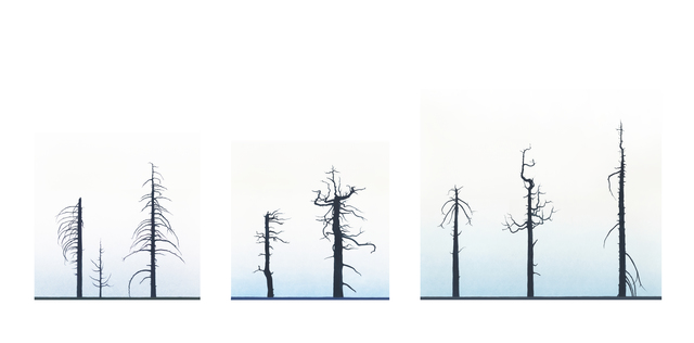 , 'Eight Burnt Trees, Crystal Lake,' 2012, LAUNCH LA