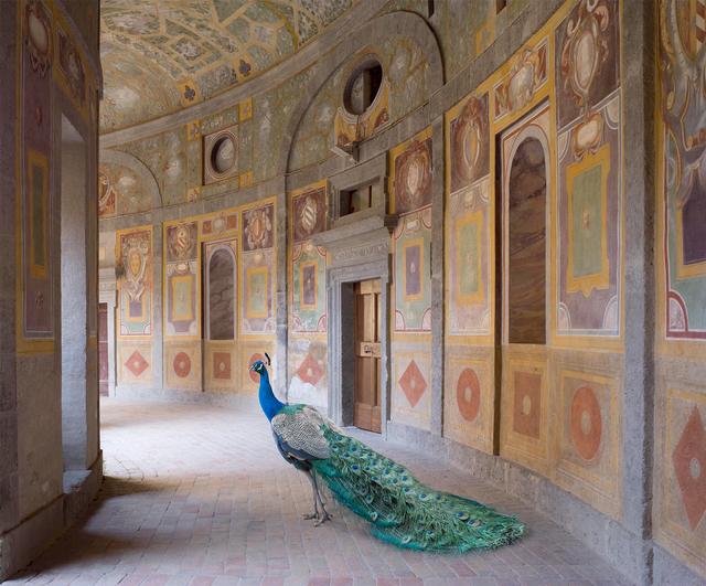 , 'Heaven's Vault, Villa Farnese, Caprarola (Metamorphoses),' 2014, Holden Luntz Gallery