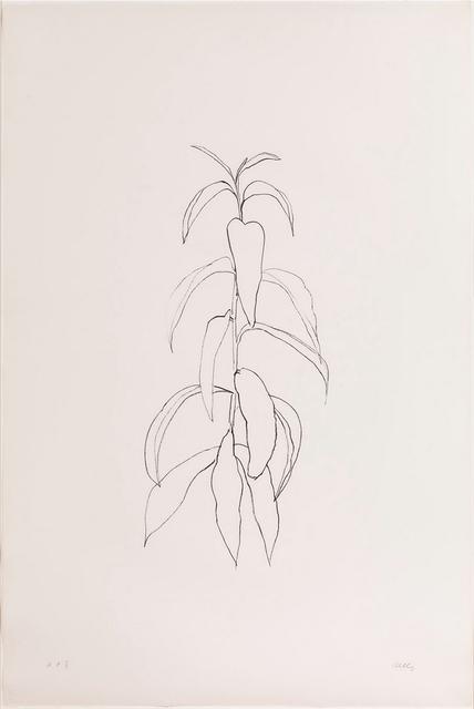, 'Peach Branch,' 1974, Mary Ryan Gallery, Inc