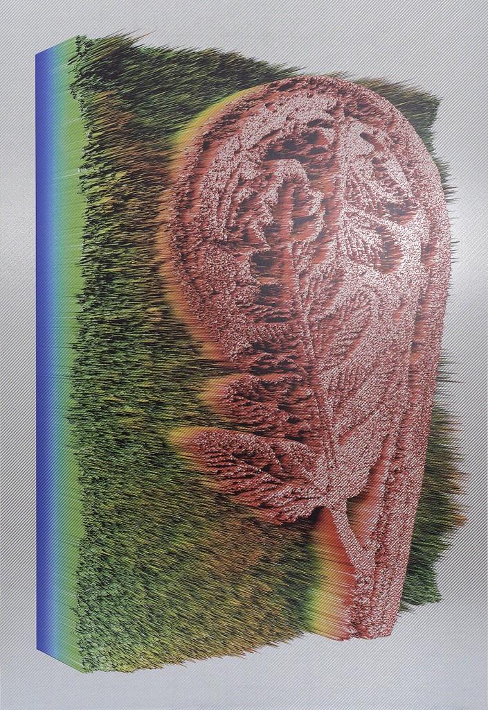 Polypodium aspidiae