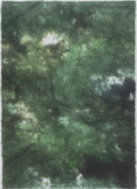 , 'Bushes 树丛,' 2015-2016, PIFO Gallery