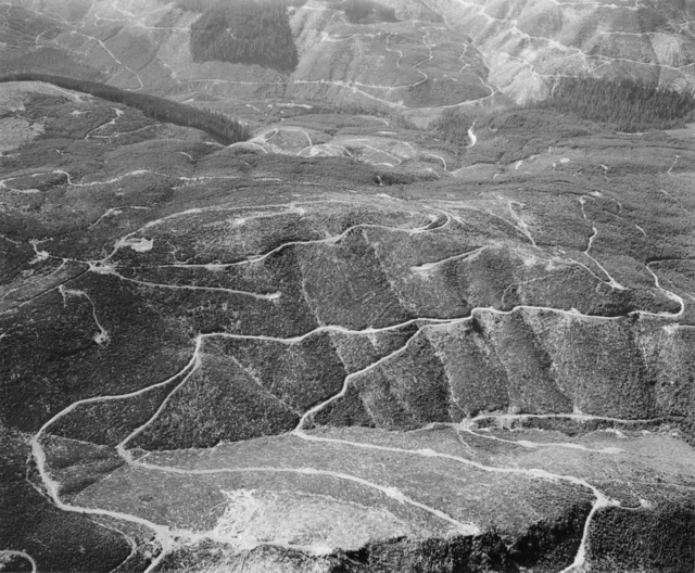 , 'Aerial view: clearcuts and logging roads- vicinity of Mt. St. Helens, Wash., 1982 (outside impact area),' 1982, Etherton Gallery
