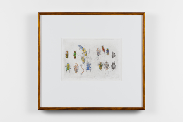 , '101 Insect Life Stories No 40. Coleoptera,' 2017, Roslyn Oxley9 Gallery