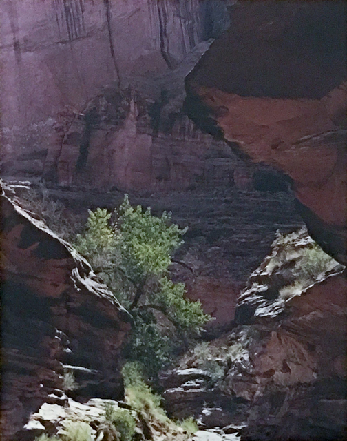 Eliot Porter, 'Coyote Gulch, Escalante River, Glen Canyon, Utah', 1980, Heather James Fine Art