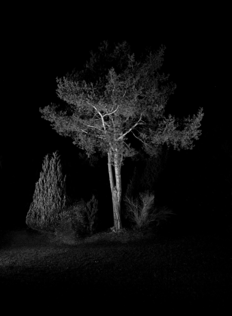 , 'Behauptungen - Tree,' 2010, Christinger De Mayo
