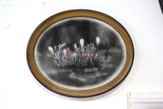 , 'Drosera Anglica,' 2019, Ani Molnár Gallery