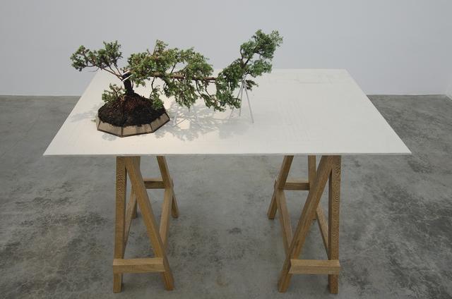 , 'Bonsai,' 2014, Galeria El Museo