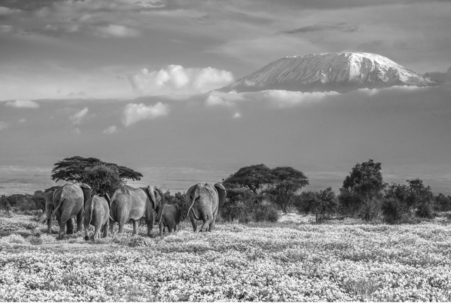 David Yarrow, 'The Garden Of Eden', Photography, Archival ink on paper, Fineart Oslo