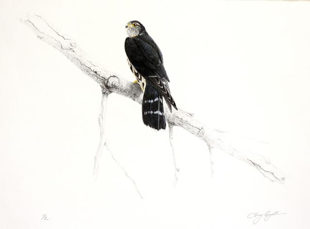 Tony Angell, 'Merlin', 1988-2012, Foster/White Gallery