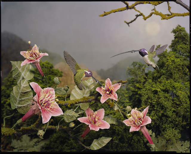 , 'Humming Birds,' 2009, G. Gibson Gallery