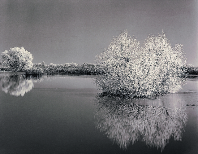 , 'Frosted Willows,' 1998, The Ansel Adams Gallery