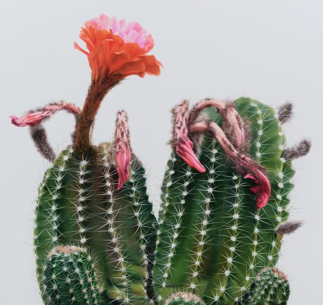 , 'Cactus No.98,' 2015, Johyun Gallery