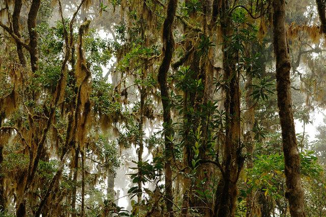 , 'Bosque nuboso - Cloudy forest,' 2014, Artflow Galeria