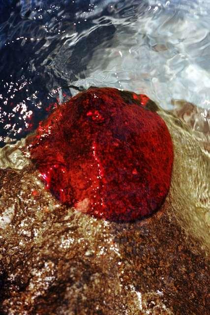 , 'Untitled, Moisson Rouge,' 2019, Carlos Carvalho- Arte Contemporanea