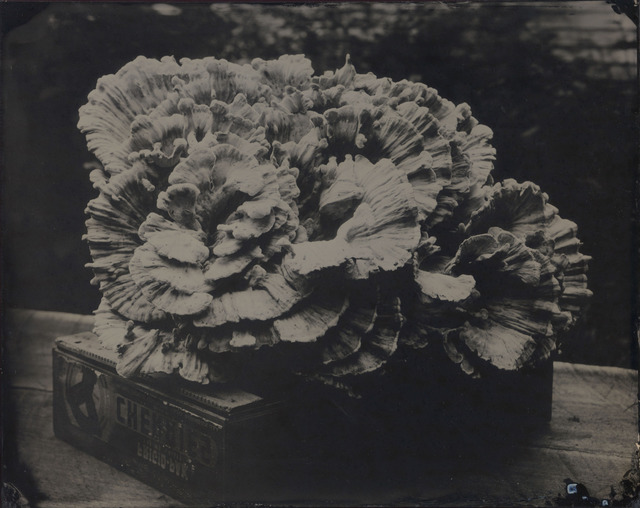 , 'Fungi,' 2009, Gallery NAGA