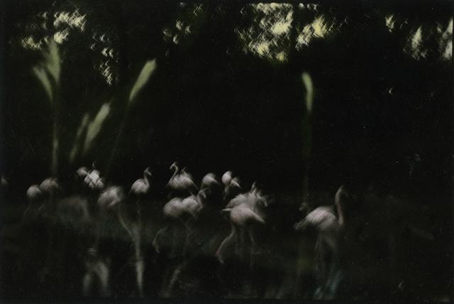 , 'Flamingo Fandango, Berlin, West Germany (From a Duke Ellington Title),' 1978, Jenkins Johnson Gallery