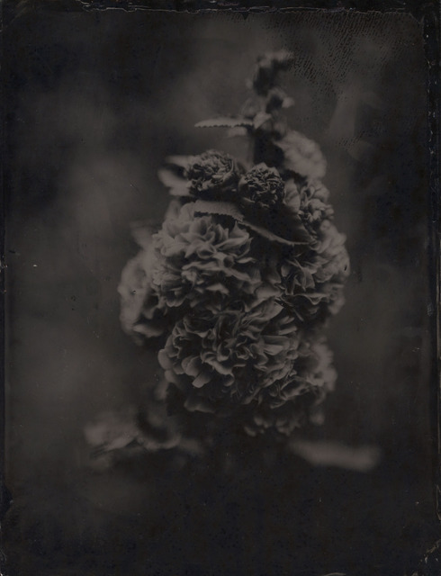 , 'Hollyhock,' ca. 2008, Gallery NAGA