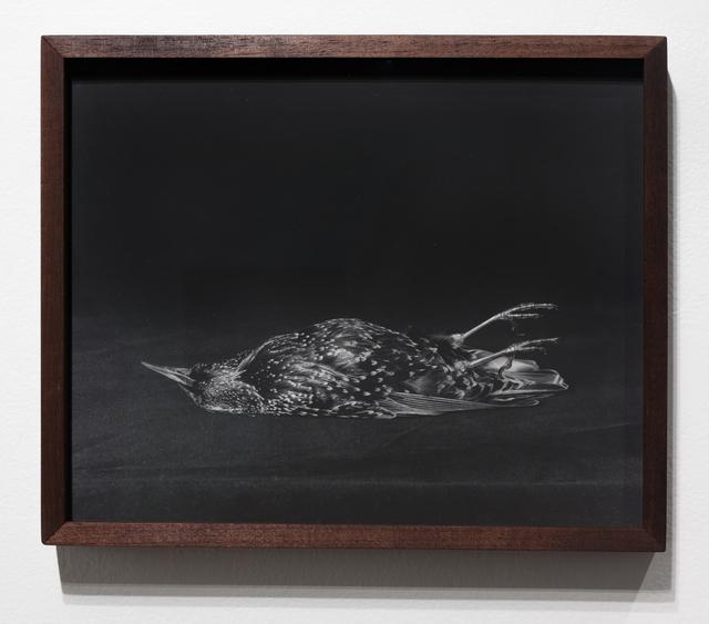 , 'Starling,' 2017, EUQINOM Gallery