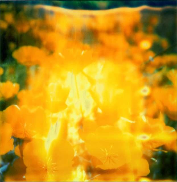 Stefanie Schneider, 'Yellow Flower', 2005, Instantdreams