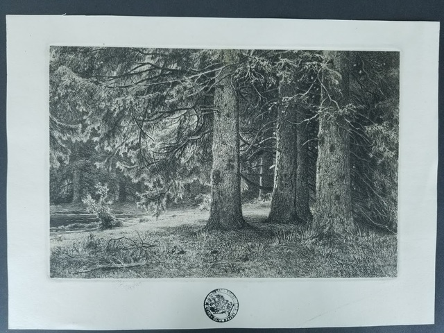 Ivan Shishkin, 'Fir in the Shuvalov Park', 1965-1875, Tranter-Sinni Gallery