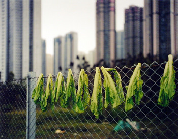 Michael Wolf (1954-2019), 'Drying Salad Leaves, Hong Kong', 2004, Museum of Contemporary Photography (MoCP)