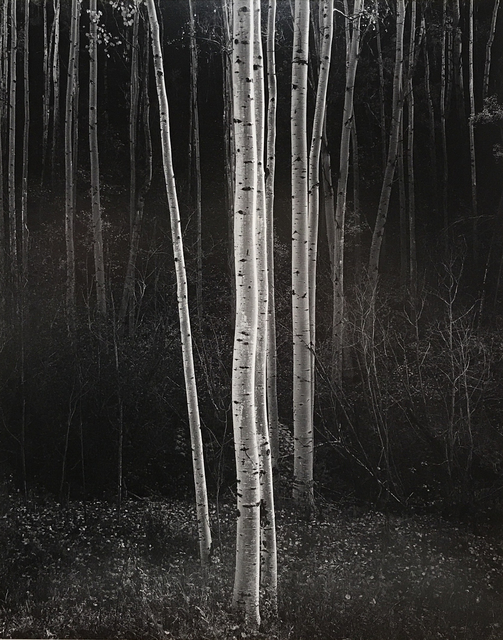 Ansel Adams, 'Aspens, Northern New Mexico, 1958 ', 1958, Photography West Gallery