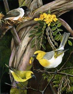 , 'Hawaiian Honeycreepers,' 2011, Andra Norris Gallery