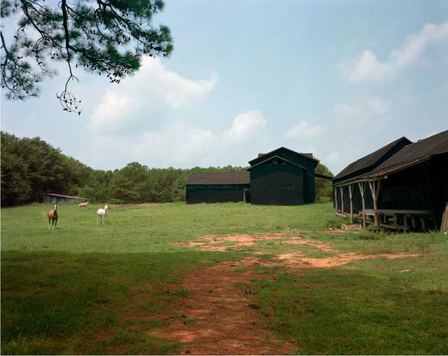 , 'Horses and Black Buildings, Newbern, Alabama,' 1978, Pace/MacGill Gallery