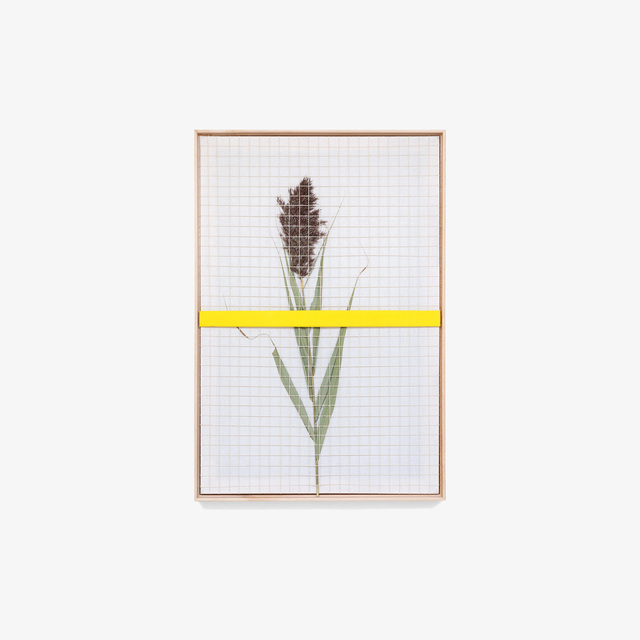 Nicole Patel, 'Summer Plume ', 2018, Tappan