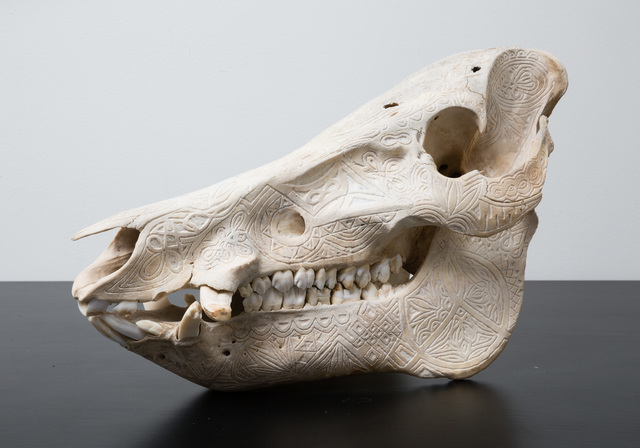 "Alex Sweet, '""Adaptive Evolution"" (Hand Carved Florida Boar Skull)', 2015, PRIMARY"